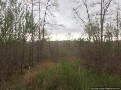 Holmes County Mississippi Hunting Land For Sale