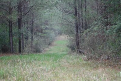 Lawrence County Mississippi Hunting Land