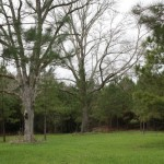 1. Lincoln County Mississippi Land For Sale