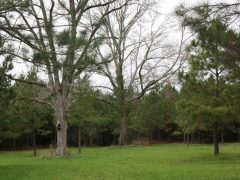 Lincoln County Mississippi Land For Sale