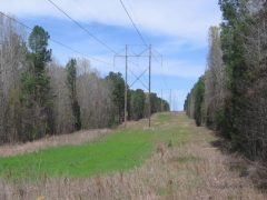Madison County MS Hunting Tract For Sale