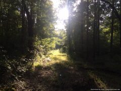 1. Leake County MS Hunting Land For Sale