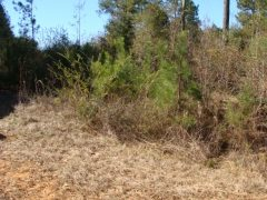 Pike County MS Home Site For Sale