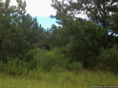 rankin-county-ms-lot-for-sale