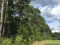 lawrence-county-ms-land-for-sale
