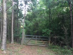 winston-county-ms-land-for-sale