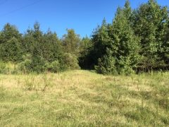 perry-county-ms-timberland-for-sale