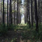 169± Acres, Holmes County, MS
