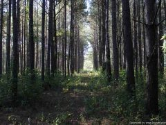 holmes-county-ms-hunting-land-for-sale