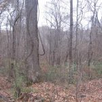 90± Acres, Yazoo County, MS