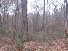 yazoo-county-ms-hunting-land-for-sale