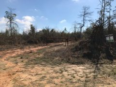 wayne-county-ms-land-for-sale