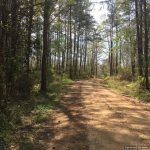 10± Acres, Lincoln County, MS