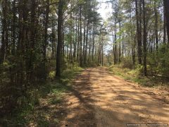 lincoln-county-ms-hunting-land-for-sale