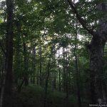 170± Acres, Copiah County, MS