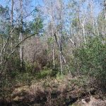 12± Acres, Pearl River County, MS