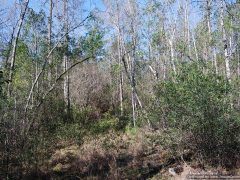 pearl-river-county-ms-land-for-sale