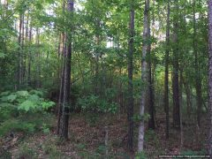 copiah-county-ms-land-for-sale