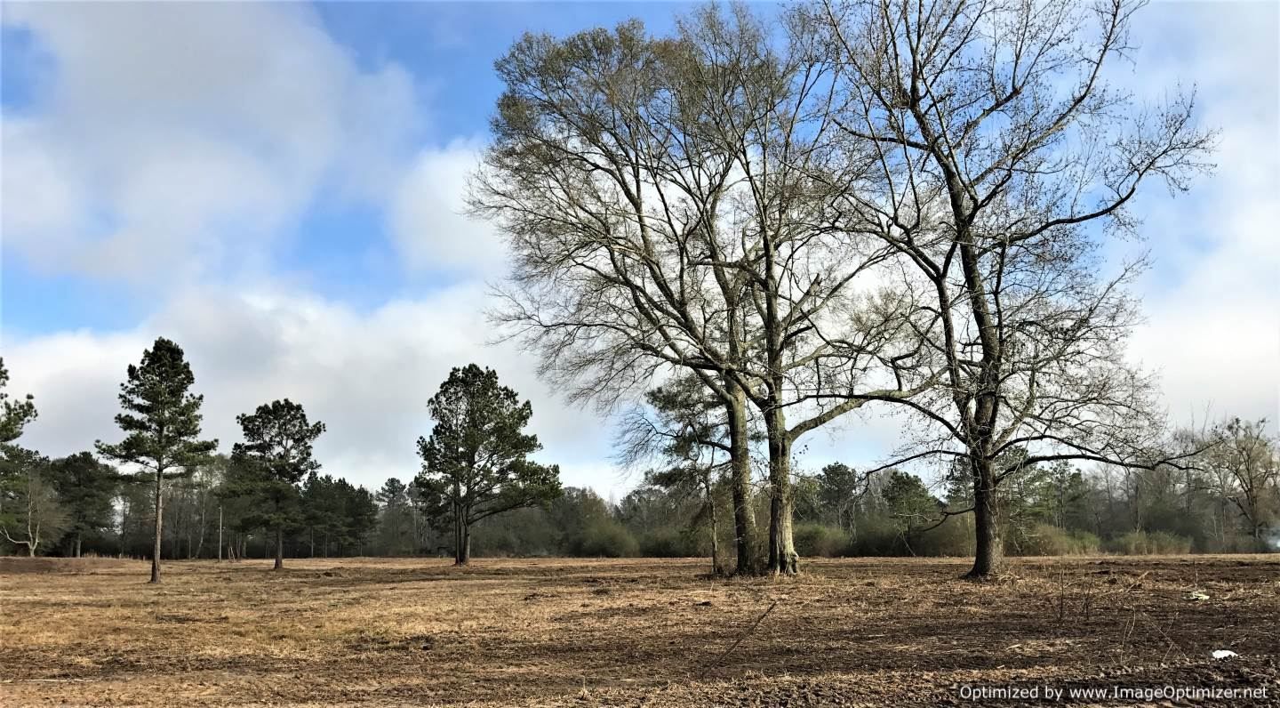walthall-county-ms-land-for-sale
