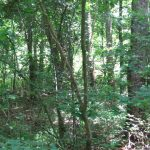 4.56± Acres, Madison County, MS