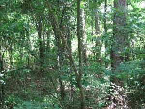 madison-county-ms-land-for-sale