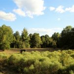 35± Acres, Attala County, MS