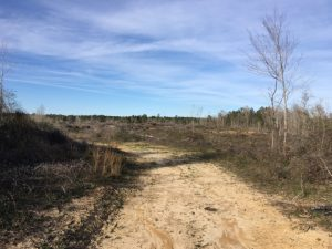 marion-county-ms-land-for-sale