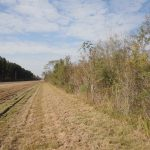 100± Acres, Simpson County, MS