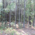 30.04 Acres in Lamar County, MS