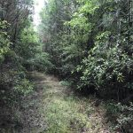 16± Acres in Clarke County, MS