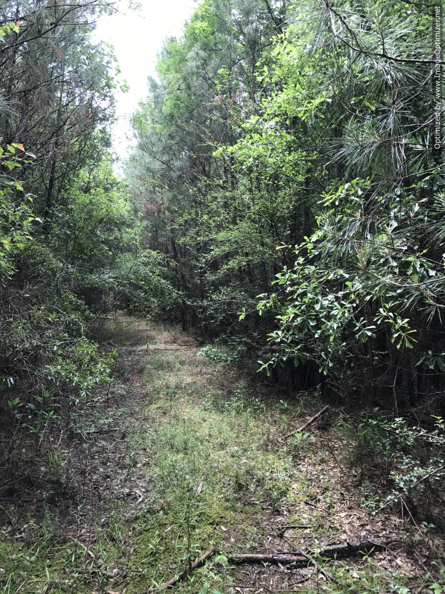 land-for-sale-in-clarke-county-ms