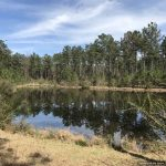 365± Acres in Lincoln County, MS