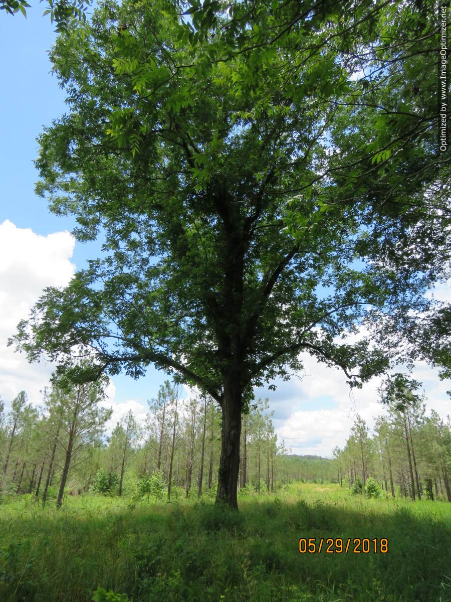land-for-sale-in-attala-county-ms