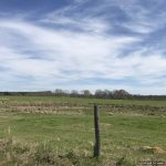 86.4± Acres in Lincoln County, MS