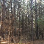 40± Acres in Amite County, MS