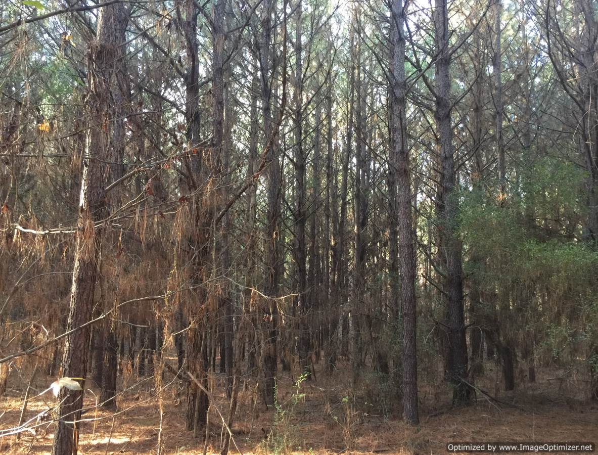 land-for-sale-in-amite-county-ms