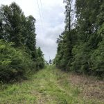 40± Acres in Simpson County, MS