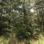 125± Acres in Wayne County, MS