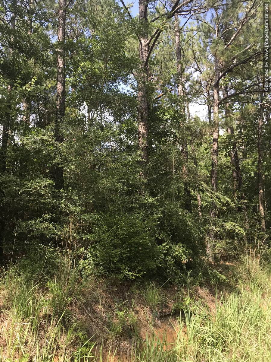 land-for-sale-in-wayne-county-ms
