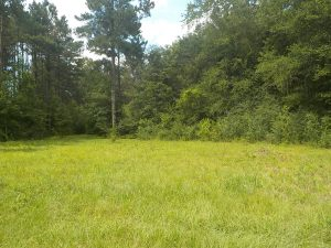 land-for-sale-in-lamar-county-ms