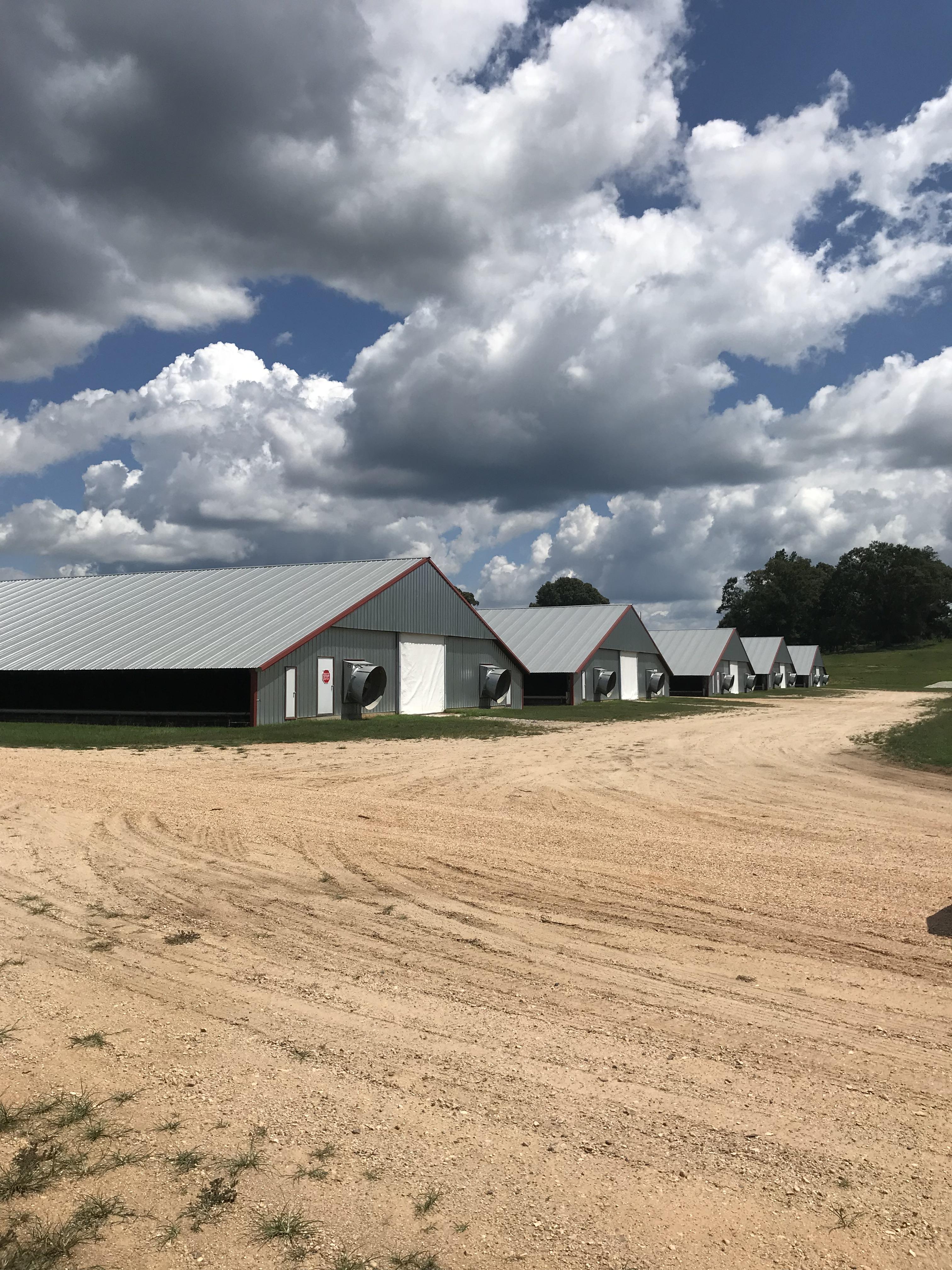 poultry-farm-for-sale-in-jasper-county-ms