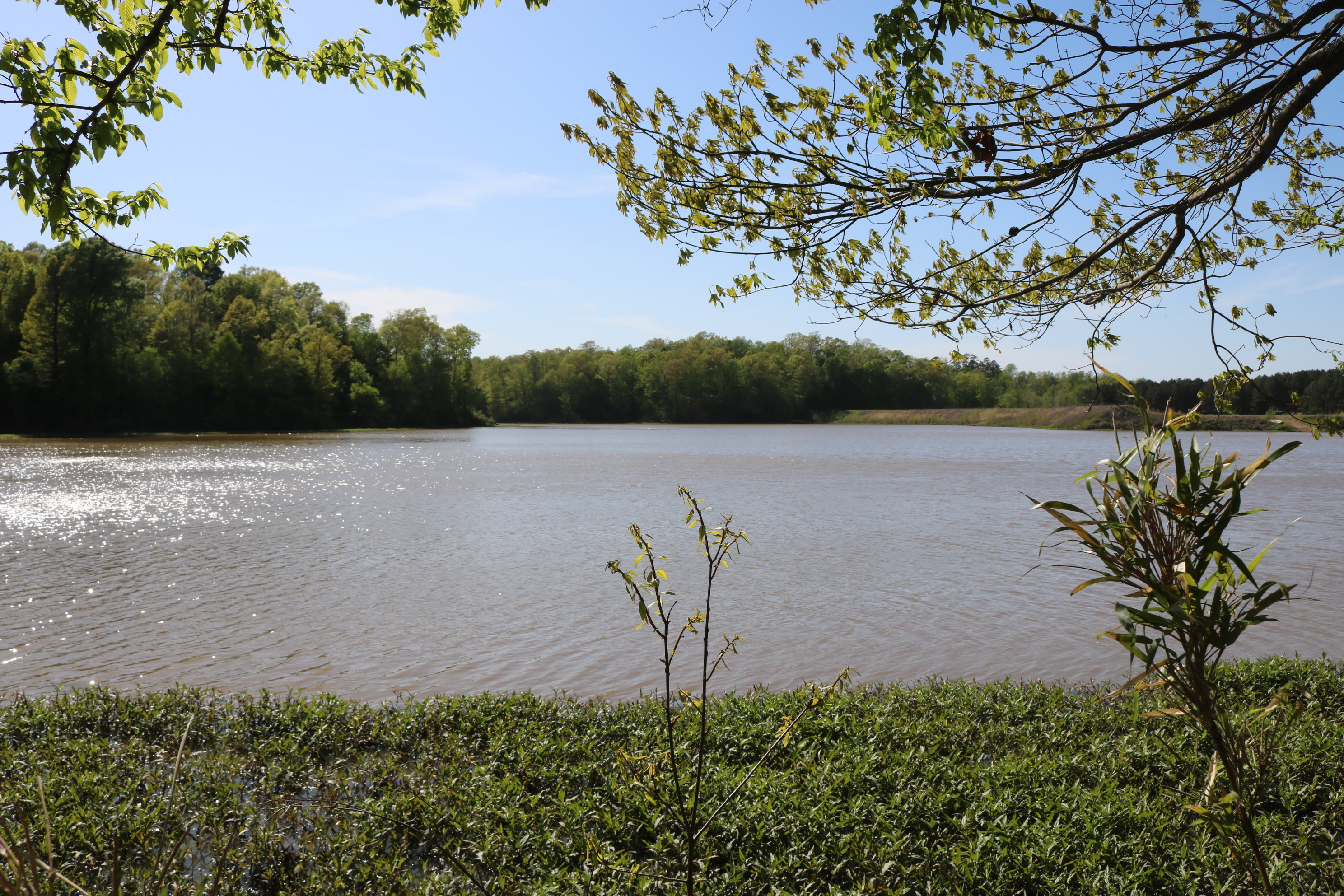 land-for-sale-in-tallahatchie-county-ms