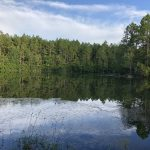 265± Acres in Pearl River County, MS
