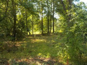 land-for-sale-in-forrest-county-ms