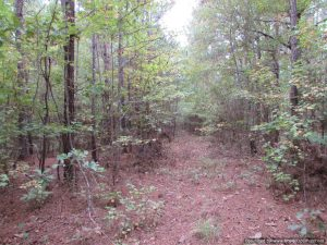 land-for-sale-in-madison-county-ms