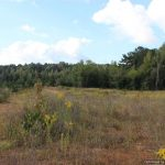 10. hunting-land-for-sale-in-copiah-county-ms