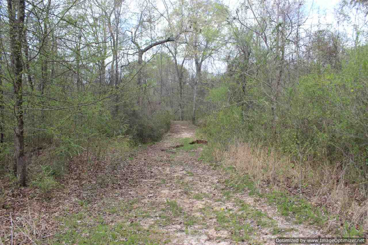 hunting-land-for-sale-in-yazoo-county-ms