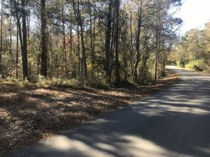 land-for-sale-in-jasper-county-ms