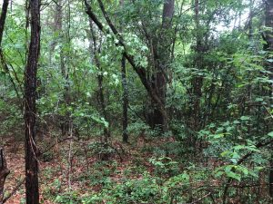 land-for-sale-in-pearl-river-county-ms