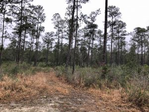 hunting-land-for-sale-in-stone-county-ms